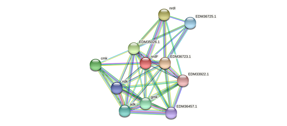 nrdF protein (Pedobacter sp. BAL39) - STRING interaction network