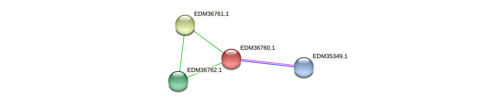PBAL39_17839 protein (Pedobacter sp. BAL39) - STRING interaction network