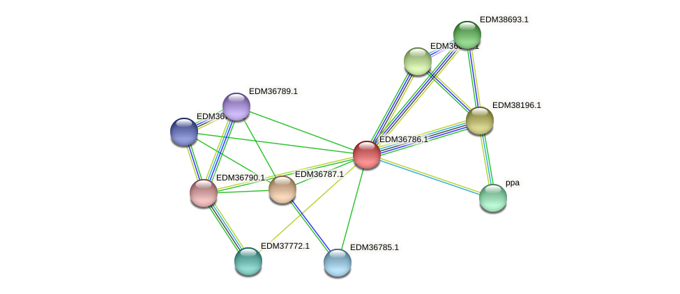 PBAL39_17969 protein (Pedobacter sp. BAL39) - STRING interaction network
