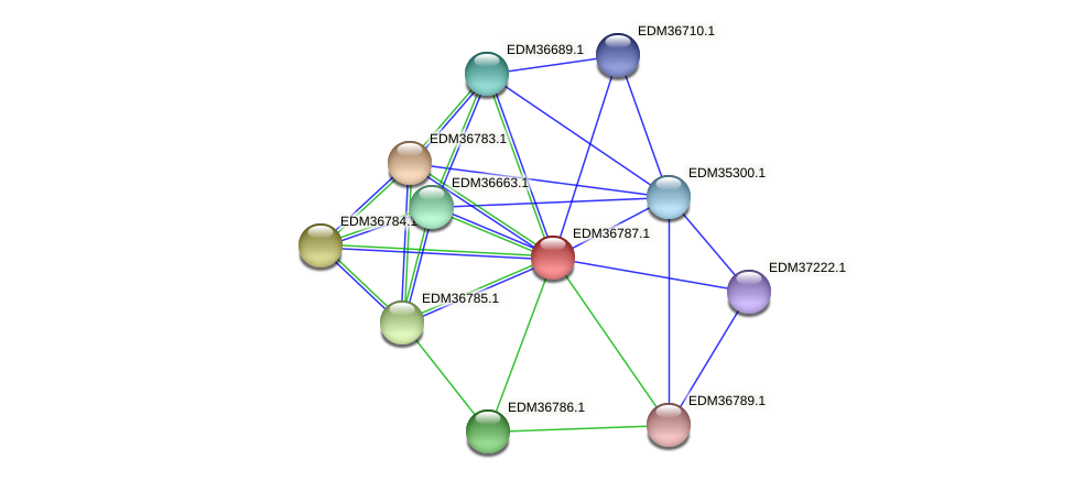 PBAL39_17974 protein (Pedobacter sp. BAL39) - STRING interaction network