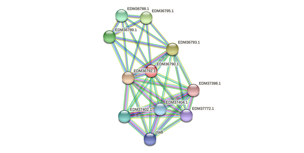 PBAL39_17989 protein (Pedobacter sp. BAL39) - STRING interaction network