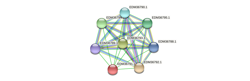 PBAL39_17994 protein (Pedobacter sp. BAL39) - STRING interaction network
