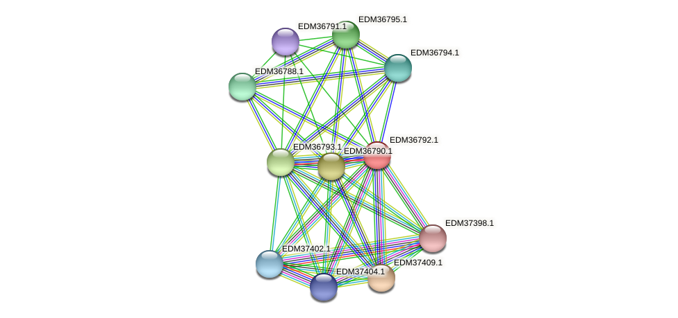 PBAL39_17999 protein (Pedobacter sp. BAL39) - STRING interaction network