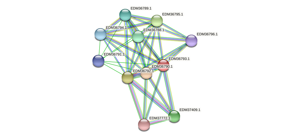 PBAL39_18004 protein (Pedobacter sp. BAL39) - STRING interaction network