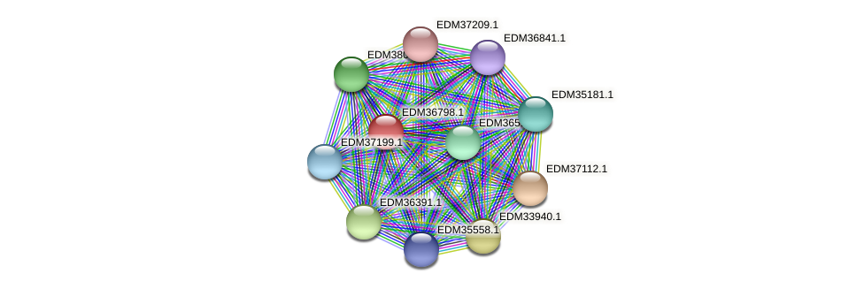 PBAL39_18029 protein (Pedobacter sp. BAL39) - STRING interaction network