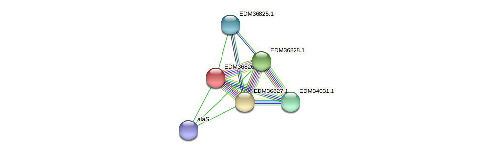 PBAL39_18169 protein (Pedobacter sp. BAL39) - STRING interaction network