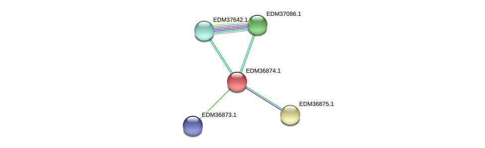 PBAL39_18409 protein (Pedobacter sp. BAL39) - STRING interaction network