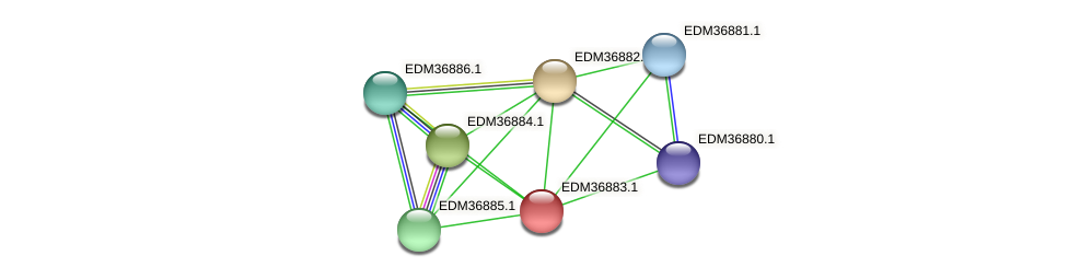 PBAL39_18454 protein (Pedobacter sp. BAL39) - STRING interaction network