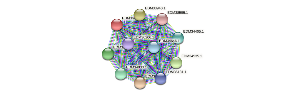 PBAL39_18549 protein (Pedobacter sp. BAL39) - STRING interaction network