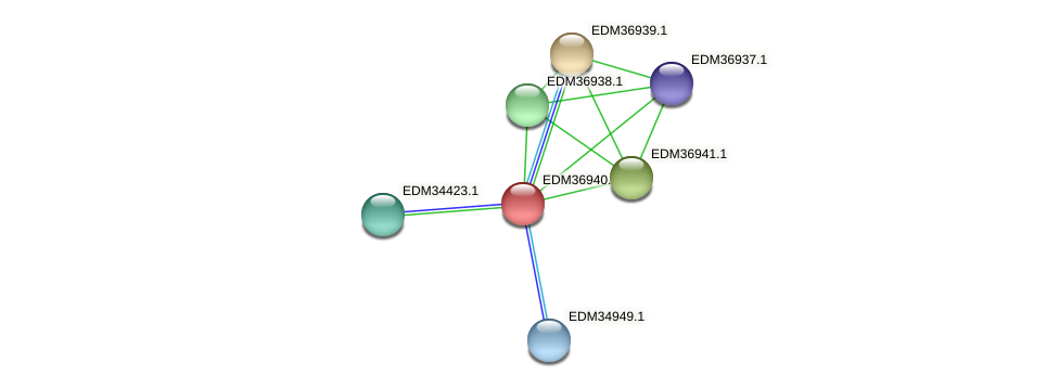 PBAL39_18739 protein (Pedobacter sp. BAL39) - STRING interaction network