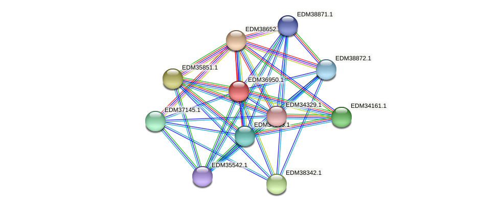 PBAL39_18789 protein (Pedobacter sp. BAL39) - STRING interaction network