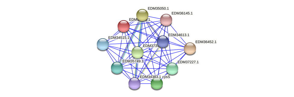 PBAL39_19225 protein (Pedobacter sp. BAL39) - STRING interaction network