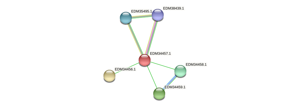 PBAL39_19240 protein (Pedobacter sp. BAL39) - STRING interaction network
