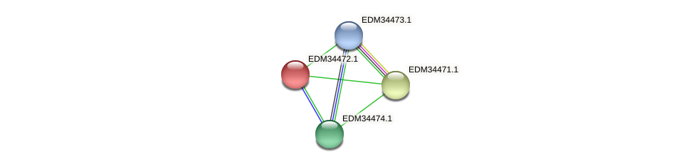 PBAL39_19315 protein (Pedobacter sp. BAL39) - STRING interaction network
