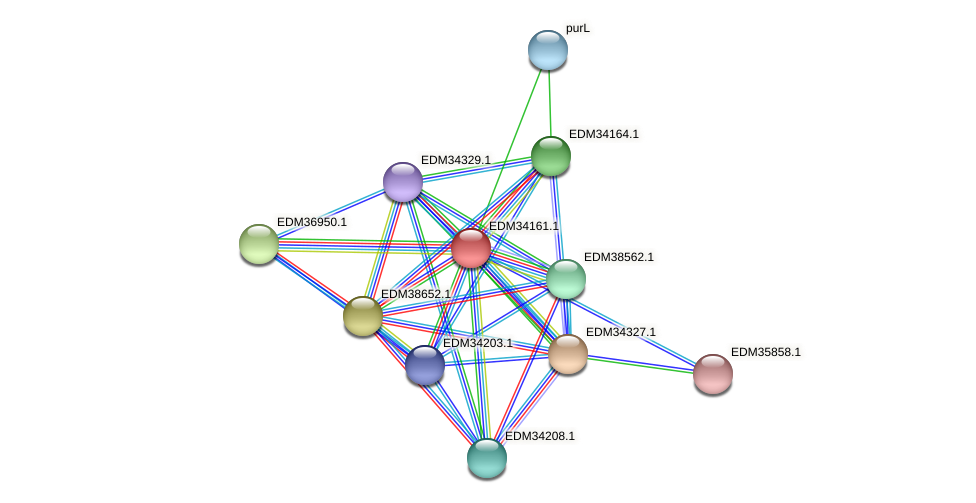 PBAL39_19489 protein (Pedobacter sp. BAL39) - STRING interaction network