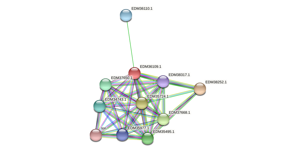PBAL39_19539 protein (Pedobacter sp. BAL39) - STRING interaction network