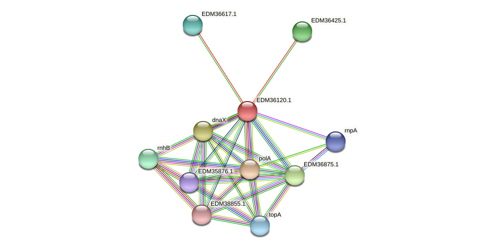 PBAL39_19594 protein (Pedobacter sp. BAL39) - STRING interaction network