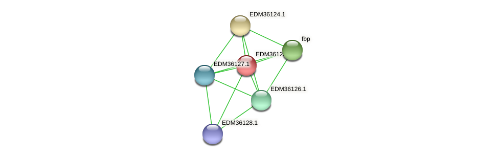 PBAL39_19619 protein (Pedobacter sp. BAL39) - STRING interaction network