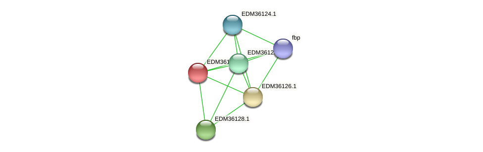 PBAL39_19629 protein (Pedobacter sp. BAL39) - STRING interaction network