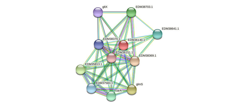 PBAL39_19644 protein (Pedobacter sp. BAL39) - STRING interaction network