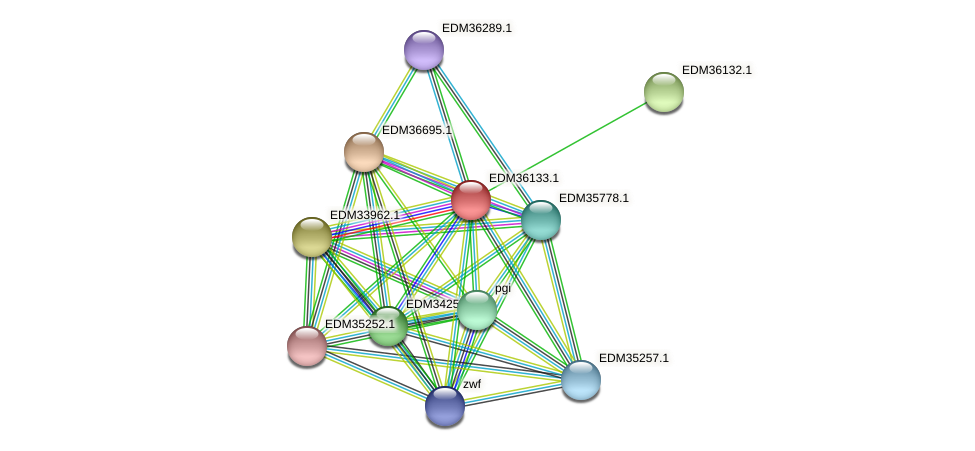 PBAL39_19659 protein (Pedobacter sp. BAL39) - STRING interaction network