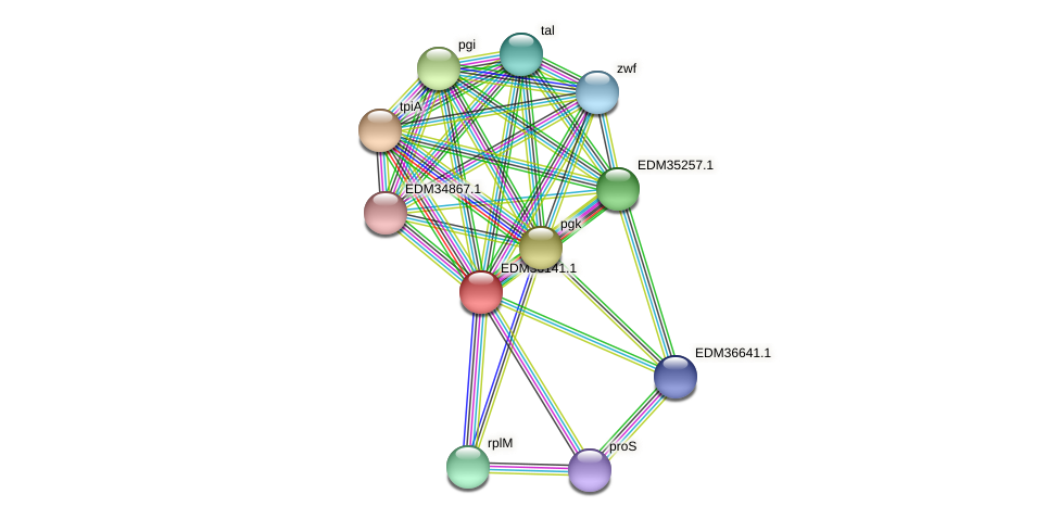 PBAL39_19699 protein (Pedobacter sp. BAL39) - STRING interaction network