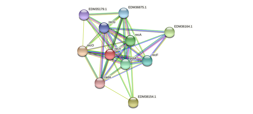 recX protein (Pedobacter sp. BAL39) - STRING interaction network
