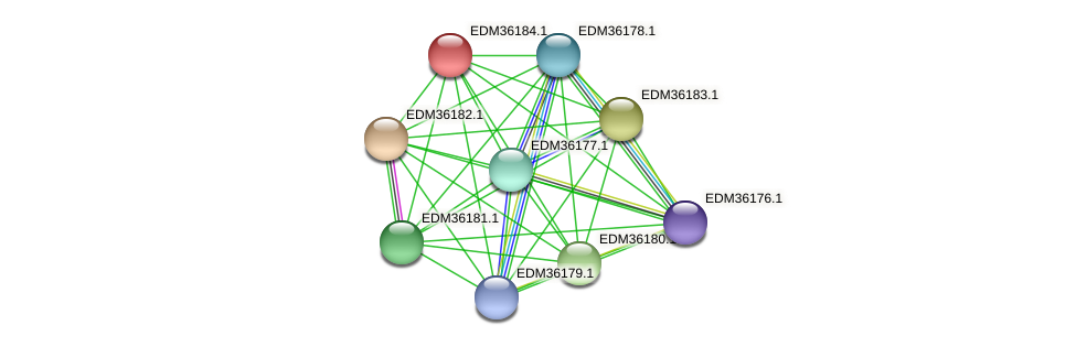 PBAL39_19914 protein (Pedobacter sp. BAL39) - STRING interaction network