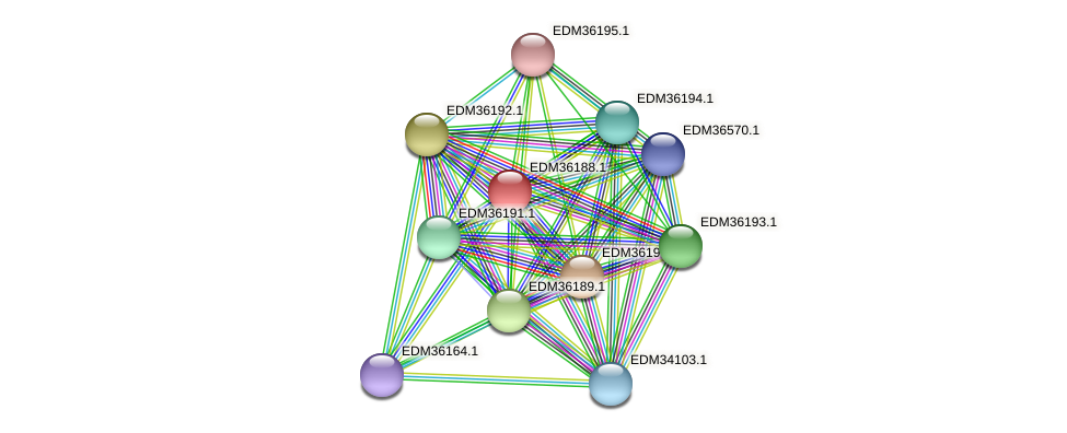 PBAL39_19934 protein (Pedobacter sp. BAL39) - STRING interaction network