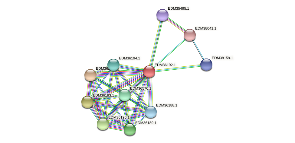 PBAL39_19954 protein (Pedobacter sp. BAL39) - STRING interaction network