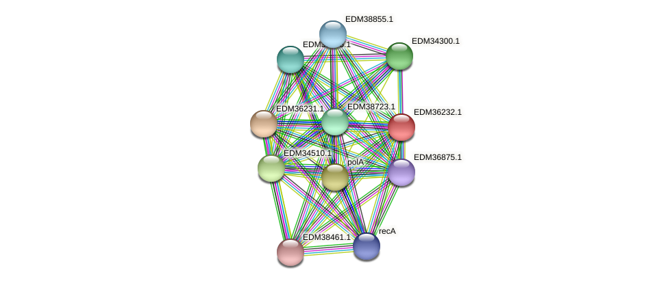 PBAL39_20154 protein (Pedobacter sp. BAL39) - STRING interaction network