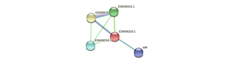 EDM36233.1 protein (Pedobacter sp. BAL39) - STRING interaction network