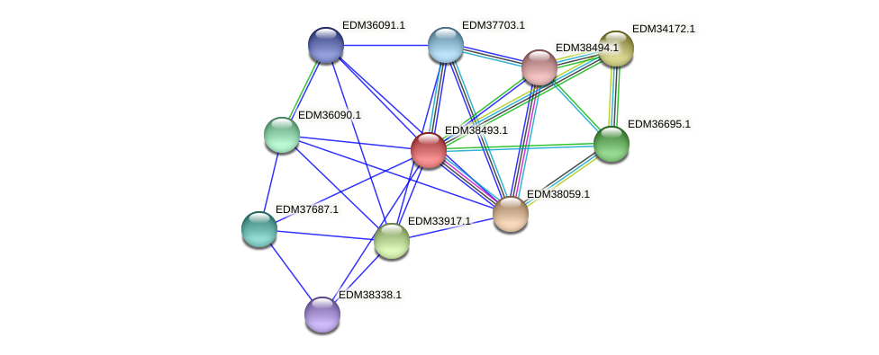 PBAL39_20510 protein (Pedobacter sp. BAL39) - STRING interaction network