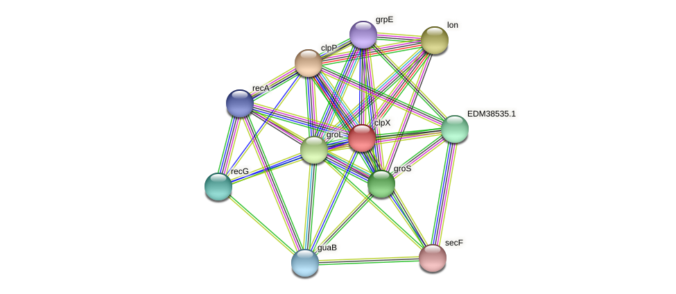 clpX protein (Pedobacter sp. BAL39) - STRING interaction network