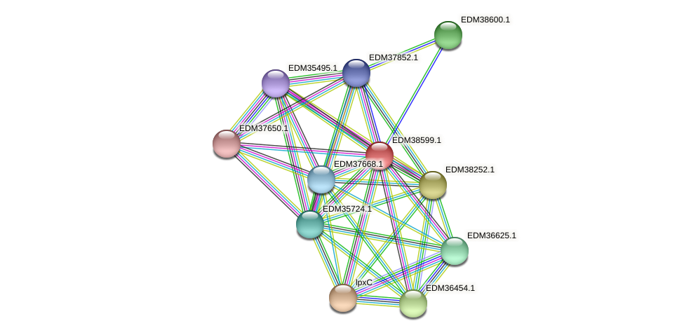 PBAL39_21040 protein (Pedobacter sp. BAL39) - STRING interaction network