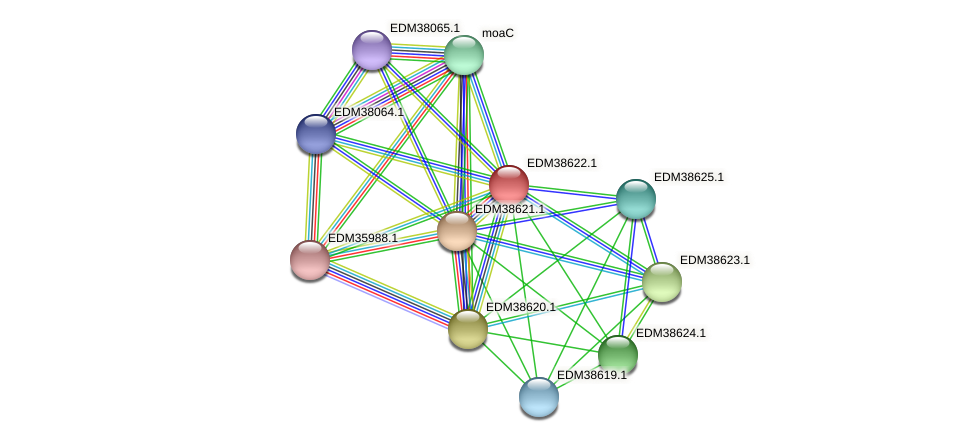 PBAL39_21155 protein (Pedobacter sp. BAL39) - STRING interaction network