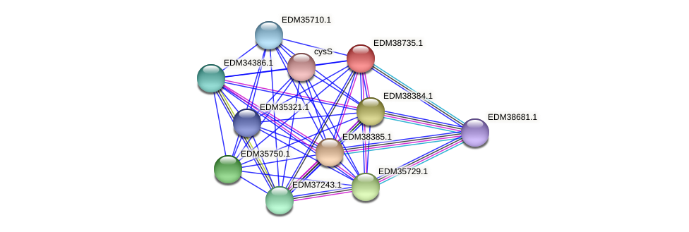 PBAL39_21720 protein (Pedobacter sp. BAL39) - STRING interaction network
