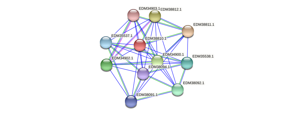 PBAL39_22095 protein (Pedobacter sp. BAL39) - STRING interaction network