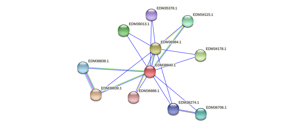 PBAL39_22245 protein (Pedobacter sp. BAL39) - STRING interaction network