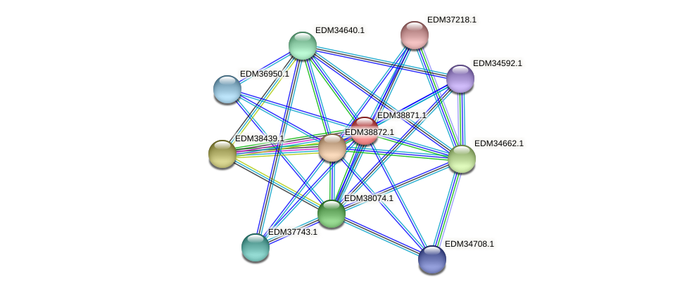 PBAL39_22400 protein (Pedobacter sp. BAL39) - STRING interaction network