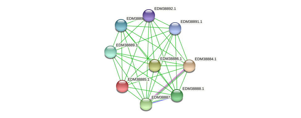 PBAL39_22470 protein (Pedobacter sp. BAL39) - STRING interaction network