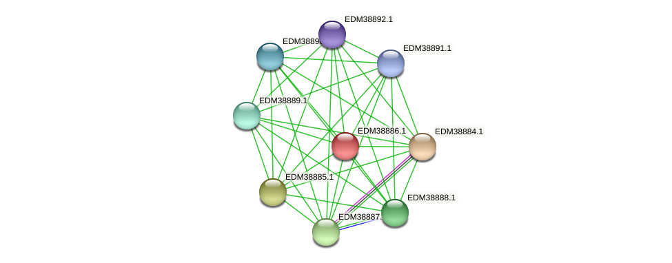 PBAL39_22475 protein (Pedobacter sp. BAL39) - STRING interaction network