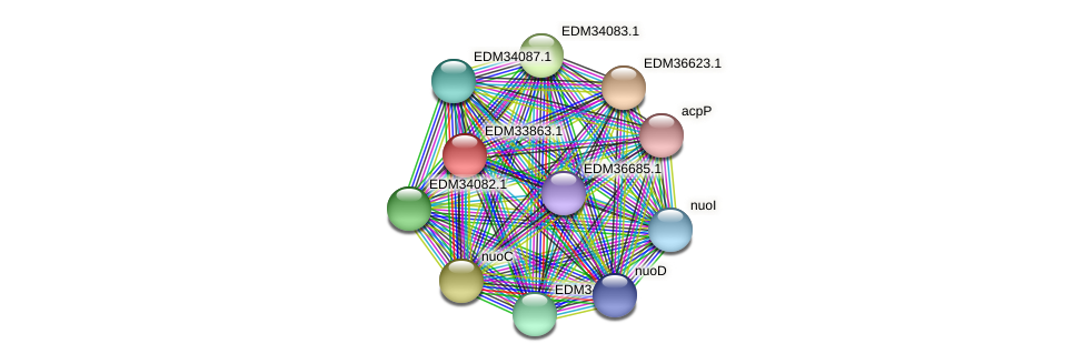 PBAL39_22922 protein (Pedobacter sp. BAL39) - STRING interaction network