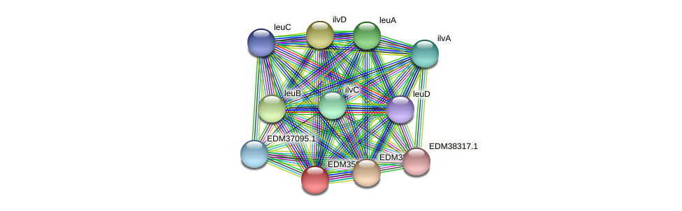 PBAL39_23257 protein (Pedobacter sp. BAL39) - STRING interaction network