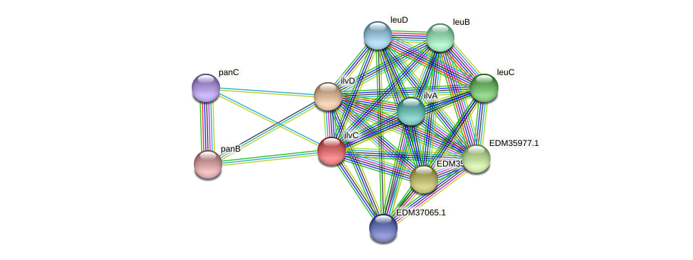 ilvC protein (Pedobacter sp. BAL39) - STRING interaction network