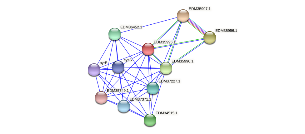 PBAL39_23347 protein (Pedobacter sp. BAL39) - STRING interaction network