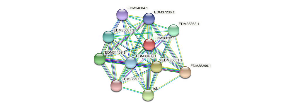 PBAL39_23532 protein (Pedobacter sp. BAL39) - STRING interaction network