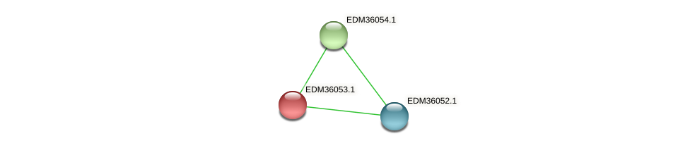 EDM36053.1 protein (Pedobacter sp. BAL39) - STRING interaction network