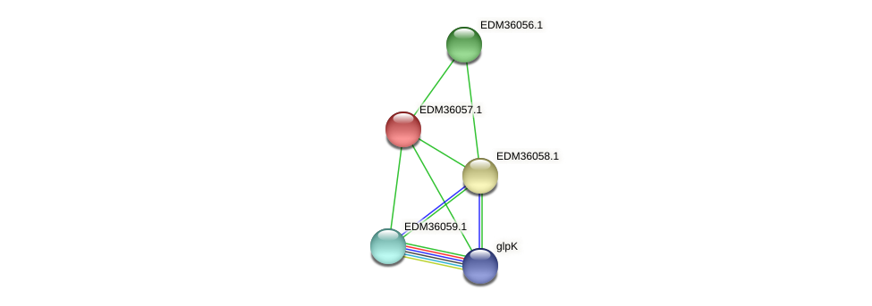 PBAL39_23657 protein (Pedobacter sp. BAL39) - STRING interaction network