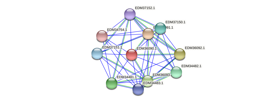 EDM36090.1 protein (Pedobacter sp. BAL39) - STRING interaction network